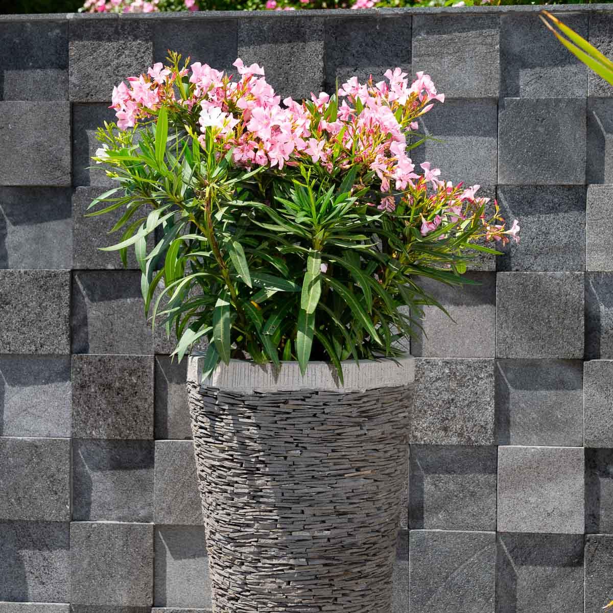 Pot de jardin en ardoise conique naturel h 80 cm for Jardiniere vasque jardin