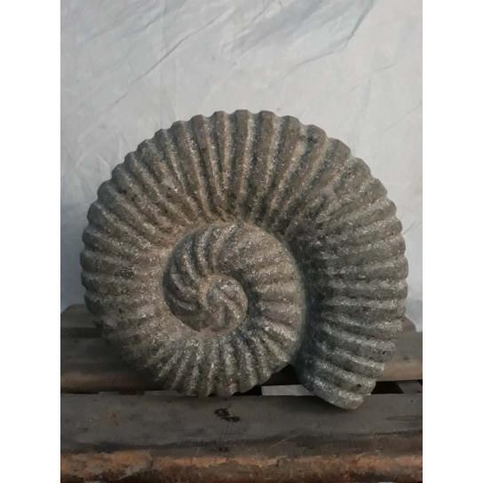 Nautilus seashell in stone 30 cm